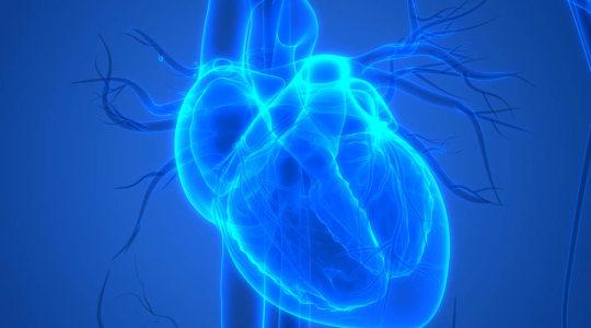 Réunion Poésie sur le thème : « Le cœur organe des sens »