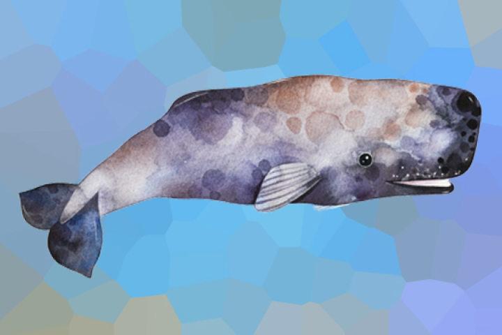 Atelier peinture sur le thème : Cachalot la baleine